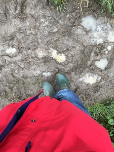 mud mud glorious mud