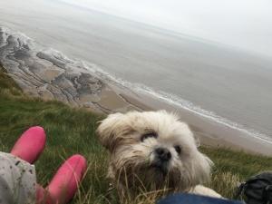 Cleo enjoying a rest