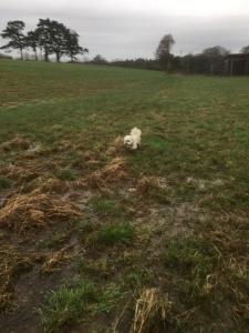 A very muddy Cleo