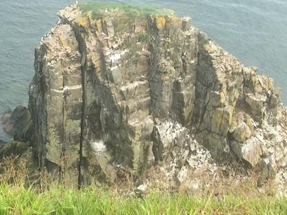 Spot the birds on Needle Rock