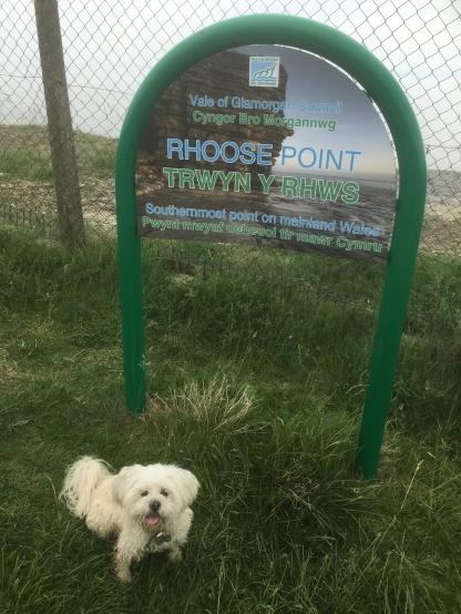 Cleo posing at Rhoose point