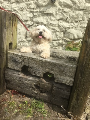 Into the stocks for Cleo