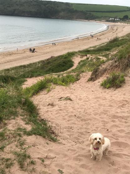 Bonnie near the beach